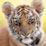 Красивая автрака из категории Коты и кошки #3534