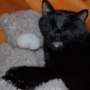 Красивая картинка для аватарки из категории Коты и кошки #3535