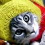 Бесплатная картинка для аватарки из категории Коты и кошки #3537