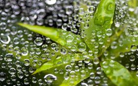 Ученые выяснили, что растения могут слышать воду