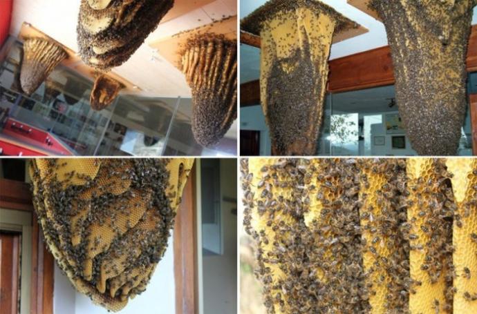 Музей пчел в Испании (7 фото)