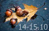 Прогноз погоды на выходные дни в Украине - 14-15 октября