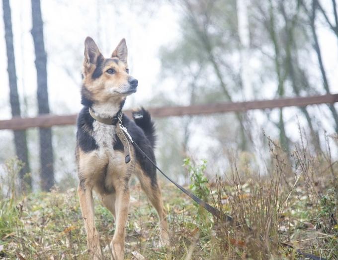 Найди друга: необыкновенные собаки ждут любящих хозяев (1)