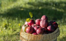 Яблучний Спас 2018: традиції, заборони і красиві привітання