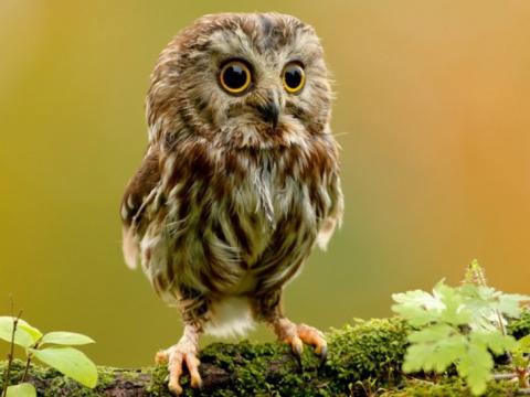 Міфи про тварин, в які всі вірять ще зі школи, а пора б перестати (15 фото) (10)