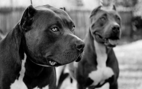 Міфи про тварин, в які всі вірять ще зі школи, а пора б перестати (15 фото) (8)