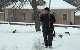 У Росії влаштували хресну ходу котів: опубліковано відео