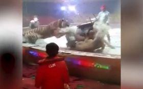 В цирке Китая тигр и львица напали на лошадь: опубликовано жуткое видео