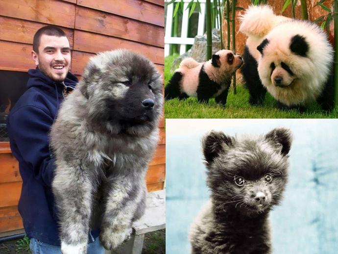 Способ завести маленького домашнего медведя без вреда для здоровья (20 фото)