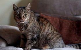 В Британии умер самый старый кот в мире