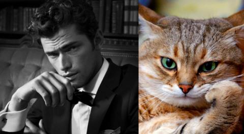 Коты как мужчины (21 фото) (17)