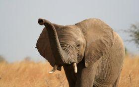 Загадочная массовая гибель слонов - ученые назвали причины