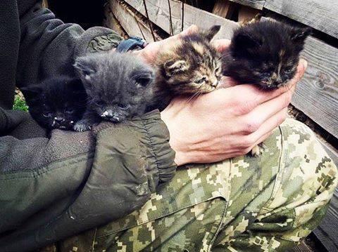 Росія ображає котиків: мережу розбурхало зворушливе фото з Донбасу (1)