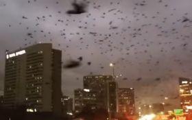 """Тисячі птахів в США влаштували """"апокаліпсис"""": з'явилося вражаюче відео"""