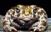 Мисливець із США зловив величезну жабу вагою у 6 кілограмів: з'явилося фото