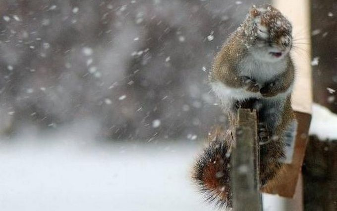 Снігопади, морози і хуртовини: в Україні оголошено штормове попередження