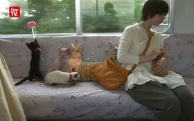 В Японії запустили потяг з котами: з'явилося відео