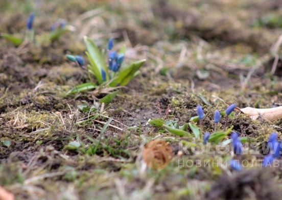 В Украине увидели первые признаки приближения весны: опубликованы фото (4)