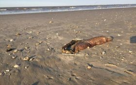 Ураган в США викинув на узбережжя невідому істоту: опубліковані фото