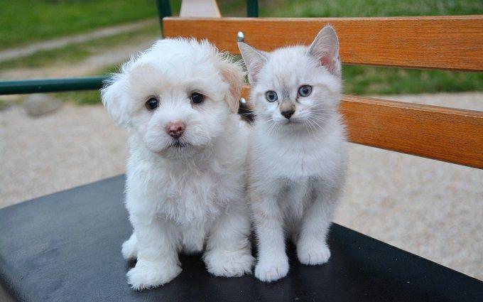 В китайском Шэньчжэне запретили есть кошек и собак - что важно об этом знать