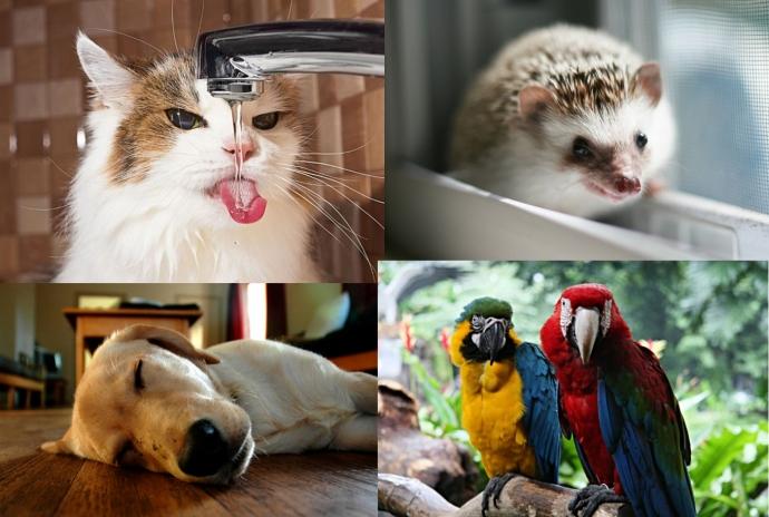 Добірка дивних звичок домашніх тварин, які заганяють нас у глухий кут (9 фото)