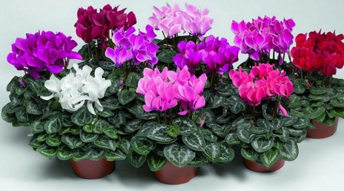 Комнатные растения, которые могут навредить ребенку (1)
