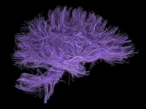 Система зв'язків у мозку може бути використана для ідентифікації особистості
