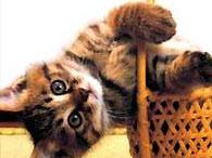 Ранний контакт с котами спасет детей от аллергии