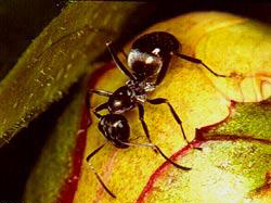 Польский пенсионер в борьбе с муравьями разрушил многоквартирный дом