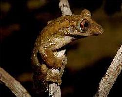 В Бразилии открыто 14 новых видов животных