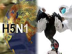 В столице Южной Кореи уничтожена вся домашняя птица, чтобы остановить птичий грипп