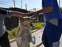 В Бухаресте Буша охраняют от уличных собак