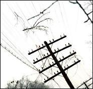 Из-за непогоды без света остались 74 населенных пункта