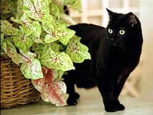 В Белом доме скончалась первая кошка США