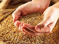 Эксперты обещают после мирового кризиса мировой голод