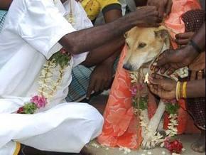 Младенца в Индии женили на собаке из-за плохой приметы