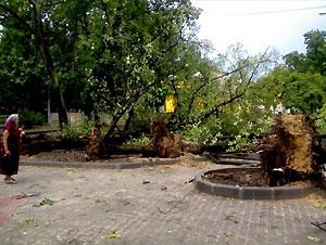 Львовская ОГА оценила убытки от урагана в области в 50 миллионов гривен