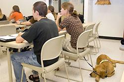 В США собака получила степень бакалавра