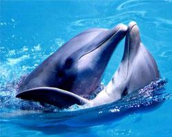 Дельфин напал на посетителей дельфинария на Антильских островах