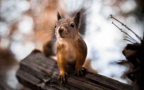 Удивительные фото животных в проницательном ракурсе: захватывающие снимки