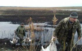 На Днепропетровщине егерь и чиновник жестоко расстреляли лебедей из Красной книги