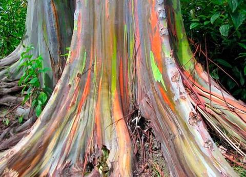 Удивительные деревья нашей планеты (18 фото) (6)
