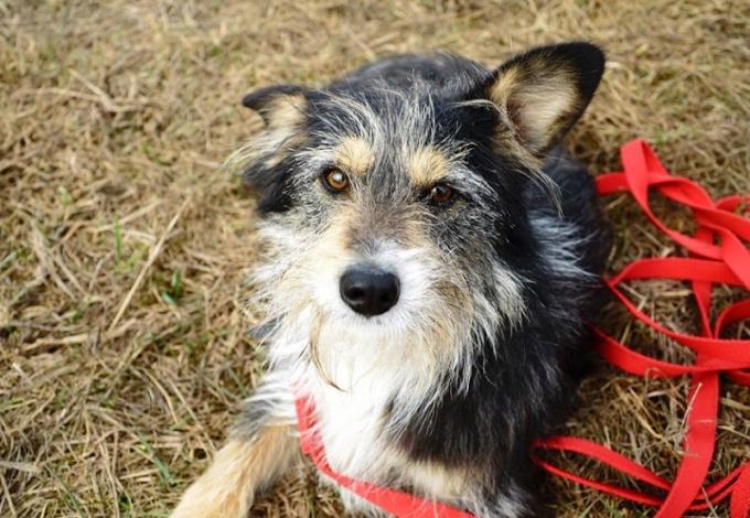 Найди друга: необыкновенные собаки ждут любящих хозяев (7)