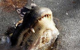 Аномальные морозы в США: появились видео с вмерзшими в лед крокодилами