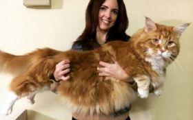 В Австралії знайшли найдовшого у світі кота: опубліковані фото