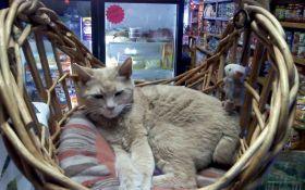 На Аляске умер кот, более 20 лет возглавлявший мэрию города