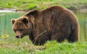 Бывшие цирковые медведи получили новую жизнь в реабилитационном центре под Житомиром