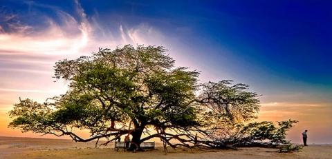 Удивительные деревья нашей планеты (18 фото) (18)