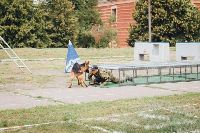 Четырехлапые офицеры: служебные собаки со всей Украины съехались в Днепр (8)