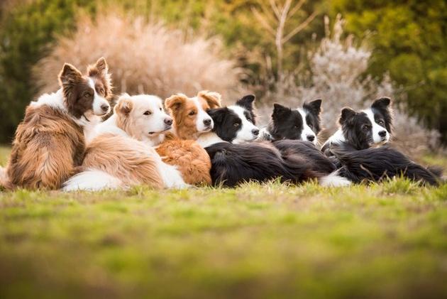 На престижному конкурсі обрали найкращі фото собак 2018 року: зворушливі кадри (10)